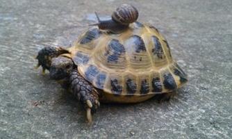 Tortue-escargot